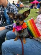 Aylesbury LGBT+ Dog Walking Group